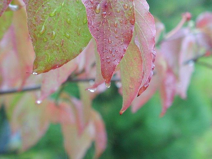 秋らしいお天気です♪